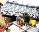 World Vets begin Animal Rescue in Japan