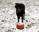Winter Wonderland and your Doggies