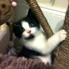 Kitten Rescue  ~ Robin's Kitty Corner