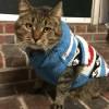 Winter Kitty ~ ROBIN'S KITTY CORNER