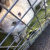 Meow Mixer – April 28th, Tewksbury – ROBIN'S KITTY CORNER