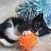 FREE KITTENS – ROBIN'S KITTY CORNER