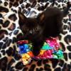 Special Kitty ~ ROBIN'S KITTY CORNER