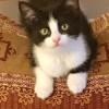 New Pet ~ ROBIN'S KITTY CORNER