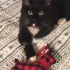 Christmas Kitty  ~ ROBIN'S KITTY CORNER