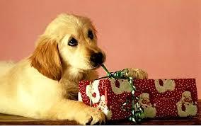 Puppy-zysk