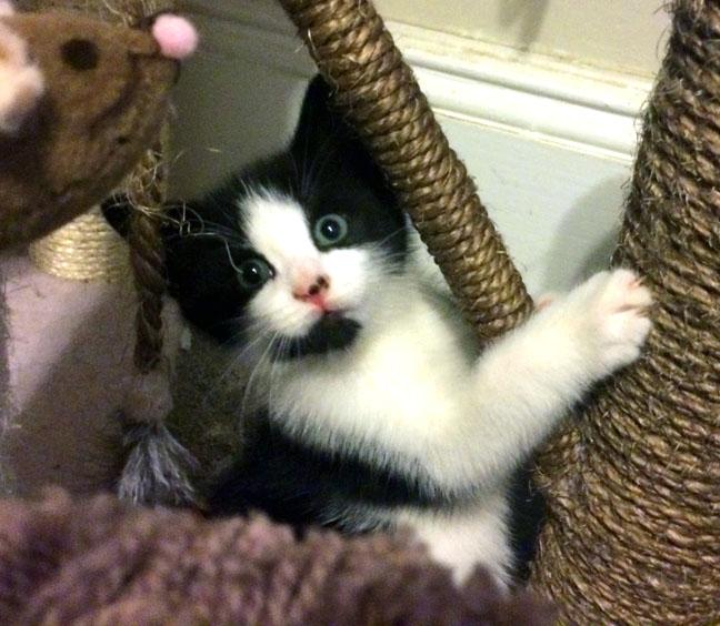 Kitten Rescue ~ Robin's Kitty Corner | The Valley Patriot
